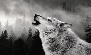 Wolf-7